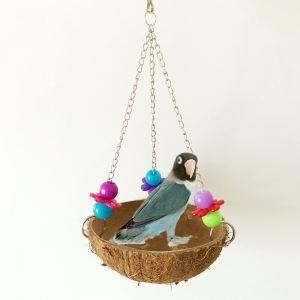 Nid d'oiseau en coquille de coco hamac balançoire