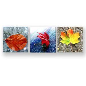 Tableau sans cadre feuilles tombées 30*30cm